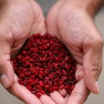 What Everyone is Saying about Barberry – Iran's Little Red Jewels